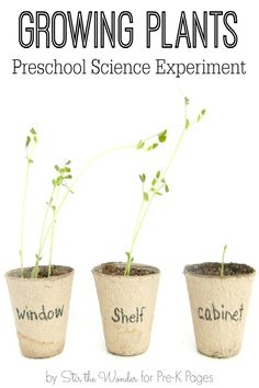 Science for Kids: Growing Plants Experiment. Your Preschool and Kindergarten kids will love growing plants at home or in the classroom with this fun science experiment! What do plants need to grow? Experiment and find out! - Pre-K Pages