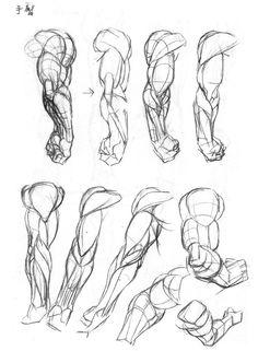 Anatomy drawing Brownie dragon quest v brownie Human Figure Drawing, Figure Drawing Reference, Art Reference Poses, Anatomy Reference, Human Anatomy Drawing, Body Drawing, Life Drawing, Arm Anatomy, Anatomy Art