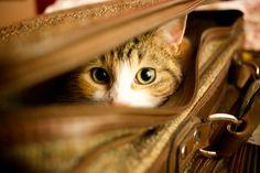 Embu 4 You: Quer viajar e levar seu cachorro ou gato?
