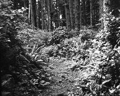 Oregon rain forest by Lynn Baus :: holga