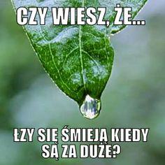 klasowy blog Beaty Skrzypiec