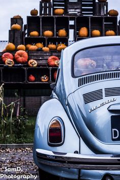 Pumpkins 🎃 and Beetle Audi, Bmw, My Dream Car, Dream Cars, Bugatti, Carros Vw, Best Muscle Cars, Vw Cars, Cute Cars