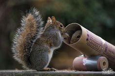 Ready for Their Closeup, These Squirrels Are an Adorable Treat From Photographer Max Ellis. | FaithHub