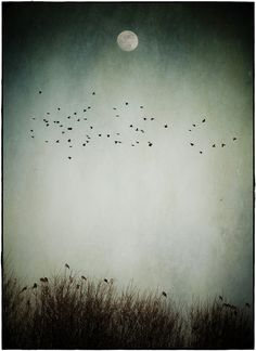 Moon by Luis Mariano González, via 500px