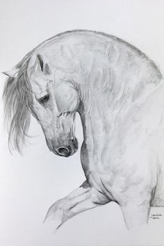 Gorgeous !Andalusian Horse drawings | ... by Janina Suuronen - Ungido Iv Fine Art Prints and Posters for Sale