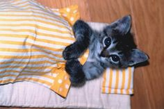 Ready for nighty night. I Love Cats, Crazy Cats, Cute Cats, Baby Animals, Funny Animals, Cute Animals, Silly Cats, Funny Cats, Kittens Cutest