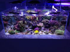 ReefrooM Tank Marine Aquarium Fish, Coral Reef Aquarium, Saltwater Fish Tanks, Saltwater Aquarium, Aquarium Design, Aquarium Ideas, Salt And Water, Fresh Water, Reef Tanks