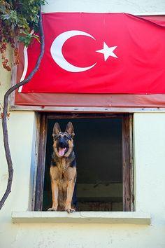 German shepherd and Turkish flag, Istanbul, Turkey