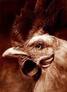 [200802] 닭