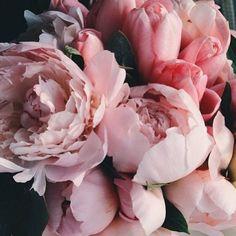 """""""Peonies! #bloomsoftheday #peonies #flowers #love"""""""