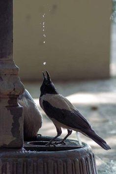 The Crow, Love Birds, Beautiful Birds, Animals Beautiful, Funny Bird, Animals And Pets, Cute Animals, Ugly Animals, Jackdaw