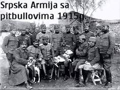 Serbian Army with pitbulls in WW1, 1915