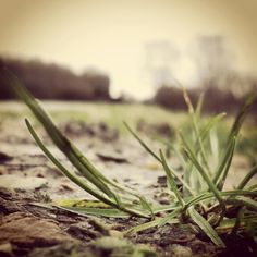 Simply grass...