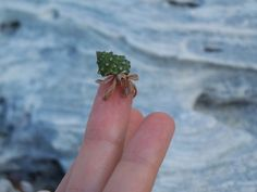 Tiny hermit crab in a cute green shell.