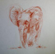 Elefante joven a sanguina