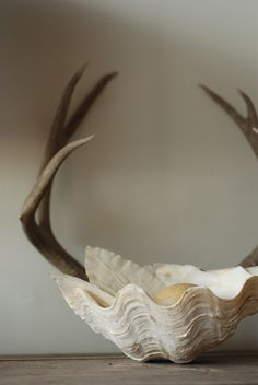 antlers in shell April Tidley photographer