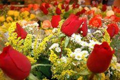 Floricultura Talismã :: Busque em Lapa