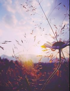 Autumn #fall #photography #beauty