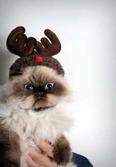 you can tell by the expression on my face, that I am NOT amused by this ridiculous reindeer hat!