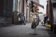 The Photographer Who Shoots Wildlife in European Cities