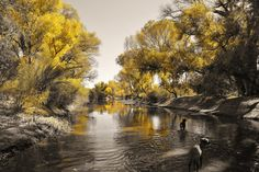 San Pedro River, near Tombstone, AZ - Taken by: Pete Mecozzi Photography
