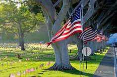 memorial day hawaii events