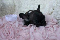 Shhhhh... prinsessa tarvitsee päiväunensa