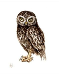 PRINT ... Athenenoctua little owl .... by happyapplebumblebee, $6.00