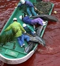 TAIJI: Stop the Annual Slaughter of Dolphins. http://www.change.org/petitions/stop-the-annual-slaughter-of-dolphins @sea Shepherd Conservation Society #defendconserveprotect