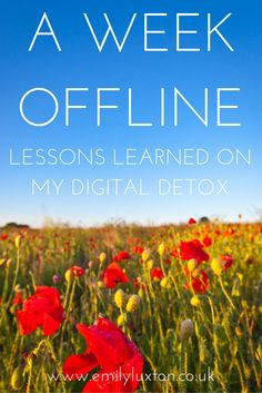 Five Surprising Things That Happened When I Switched Off for a Week.  I took a digital detox in Italy with Time to Log Off. This is what I discovered!