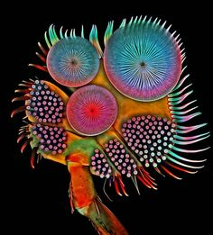 Front foot (tarsus) of a male diving beetle by Dr. Igor Siwanowicz   Nikon Small World microphotography competition