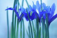 冬の余韻  by 彩花