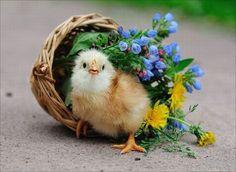 Little chick.