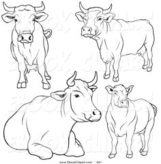 great set of cows