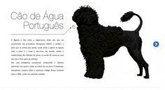 O Cão de Água Português
