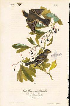 John James Audubon Bird Prints 1st Edition 1840, Volume 1