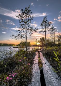 🇫🇮 Boardwalk by lake (Finland) by Asko Kuittinen cr. Scenery Photography, Landscape Photography, Beauty Around The World, Around The Worlds, Sunset Photos, Mother Nature, Paths, Sunrise, Beautiful Places