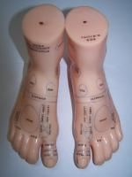 Reflexology Foot Models