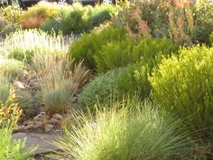 A tapestry of hebe, fescue, penstemon and euphorbia in a dry river bed in the front garden captures the evening light and the plants in the hell strip in . Coastal Gardens, Small Gardens, Rustic Gardens, Deck Planters, Dry River, Drought Tolerant Garden, Coastal Landscaping, Sun Garden, Small Garden Design