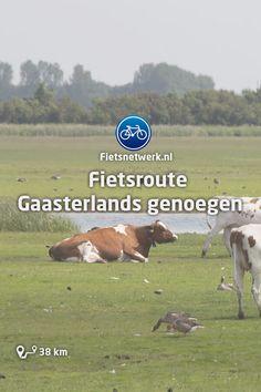 🚲 Fietsroute Gaasterlands genoegen #Fietsroutes #Fietsen #Friesland #Gezond #Natuur