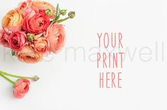 Coral Pink Ranunculus Flowers on White Desk / Stock Photography / Print Background / Graphic Design Photograph / High Res File #41