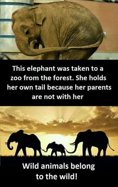 Visiting ZOO can be very interesting. Some animals are so funny :) We are bringing to you a compilation about funny ZOO animals. Save Animals, Zoo Animals, Animals And Pets, Funny Animals, Animals Planet, Amazing Animals, Animals Beautiful, Animal Facts, Animal Quotes
