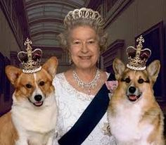 Fun Fact: The Corgi is a part of the royal family in England. Queen Elizabeth II has several Corgis and has held gatherings with other breed enthusiasts. Lady Diana, Prinz Philip, Die Queen, Isabel Ii, Queen Of England, England Uk, London England, Princesa Diana, Corgi Dog