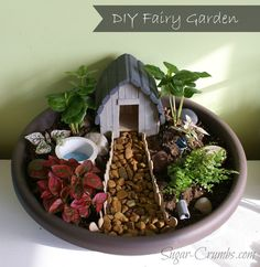 Sugar Crumbs - leaving sweetness wherever you look | I need to make a mini fairy garden. It would be great in my small apartment!