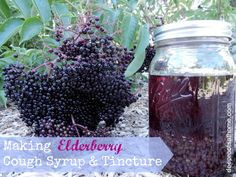 It's Elderberry Time ~ Making Cough Syrup and Tincture | Deep Roots at Home