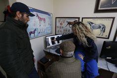 Как в Стамбуле лечат скаковых лошадей • НОВОСТИ В ФОТОГРАФИЯХ