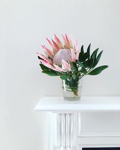My protea is still looking so fresh after a week. Love the shades of pink in thi. My protea is sti Green Plants, Green Flowers, Small Flowers, Beautiful Flowers, Small Flower Arrangements, Vase Arrangements, Flower Power, 21st Birthday Decorations, Protea Flower