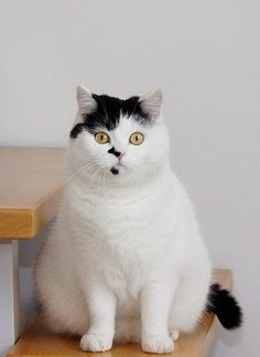 Cats - cute black and white cat - funny kitties