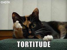 Tortitude. I haz it.