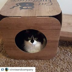 #Repost @vinnieandcompany  Bobo in her wee box from @catfurnature  she loves it! #catsoftheday #catsofig #catsofworld #blackandwhitecats #fluffycat #catinabox #catsofinstagram #cutecat #cute #animal #pet #love #catfurniture #cattoy